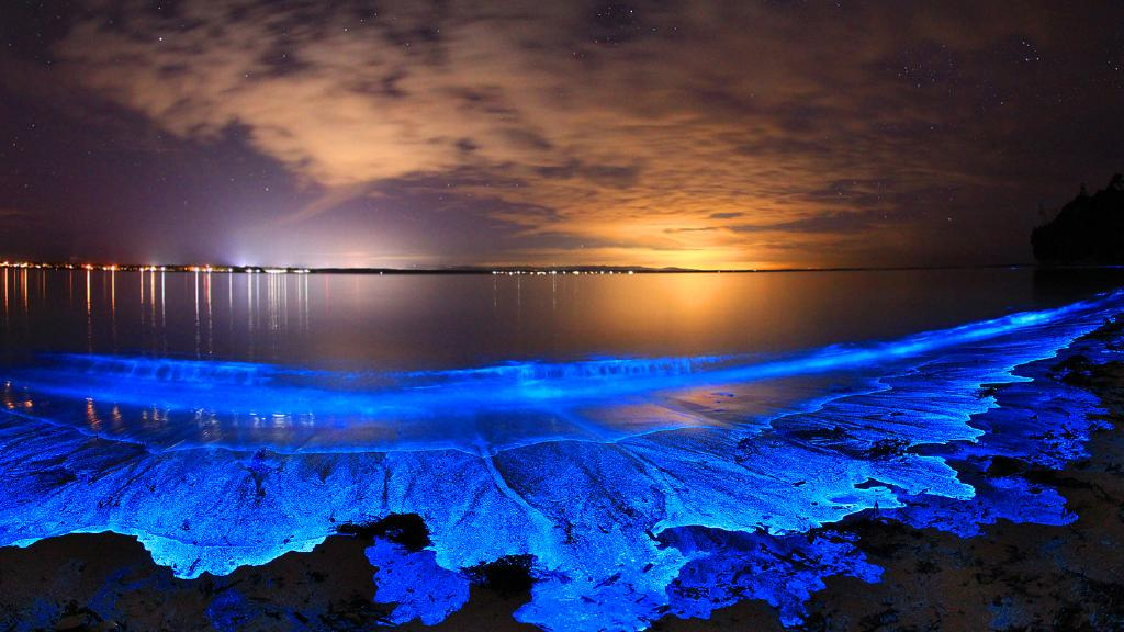 Bioluminescence - Joanne Paquette