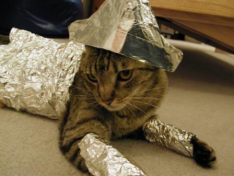 foiling-cat-actual-cat.jpg